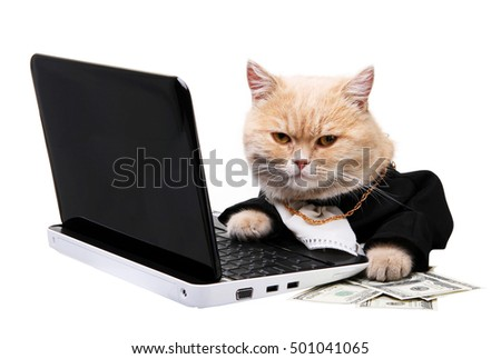 Red cat sitting on the laptop, dollar on the white background