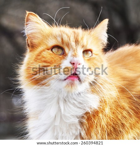 red cat sitting on the roof of the car - stock photo