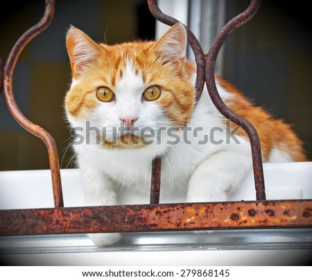 red cat sitting on the window sill and looking through  - stock photo