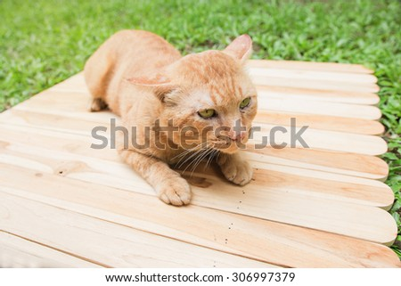 Red cat sitting on wood - stock photo