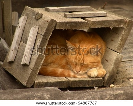 Red cat sleeping in an old wooden box - stock photo