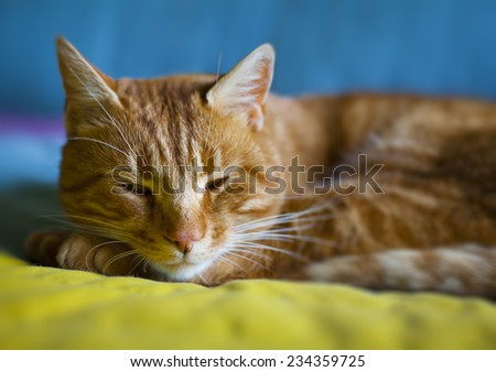 Red cat sleeping on a colored blanket and slyly looks - stock photo