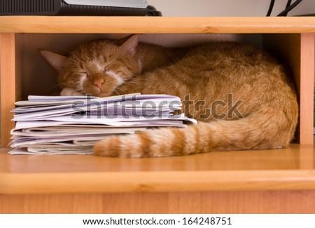 essays on sleeping