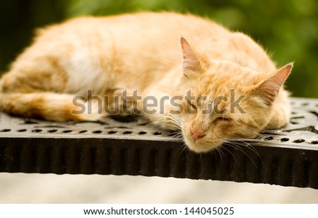 Red cat sleeps on a bench in park - stock photo