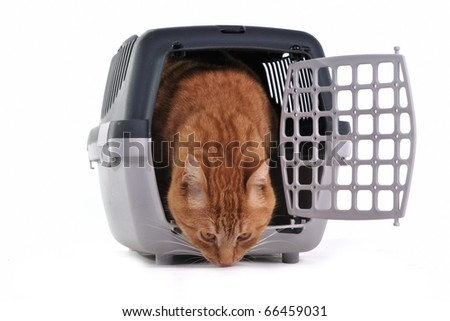 Red cat sniffing cautiously its new place sitting in pet carrier   isolated on white background - stock photo