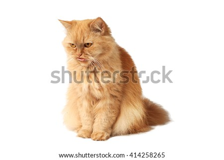 Red cat stuck out his tongue - stock photo