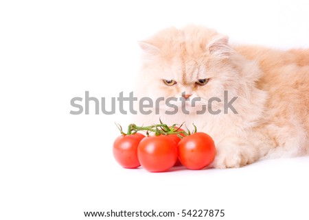 Red cat this tomato on a white background - stock photo