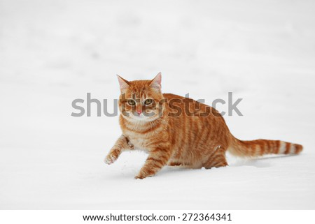 Red cat walking over white snow background - stock photo