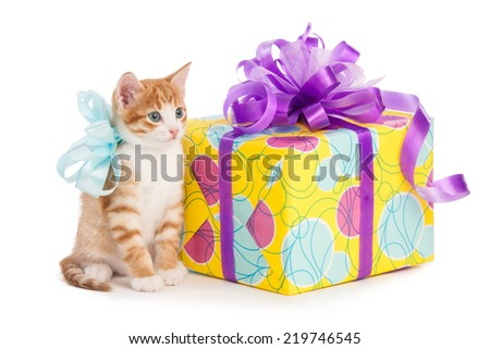 Red cat with bow sits next to a gift box - stock photo