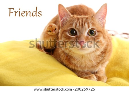 Red cat with cute chicken on yellow pillow close up - stock photo