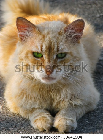 Red cat with green eyes - stock photo