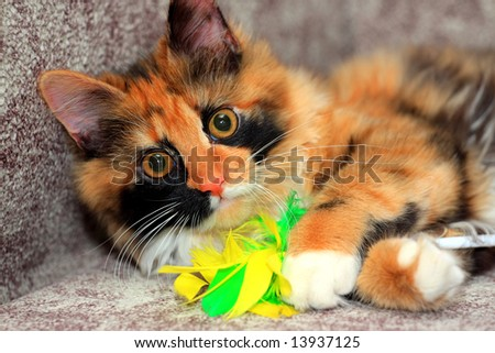 Red cat with the toy - stock photo