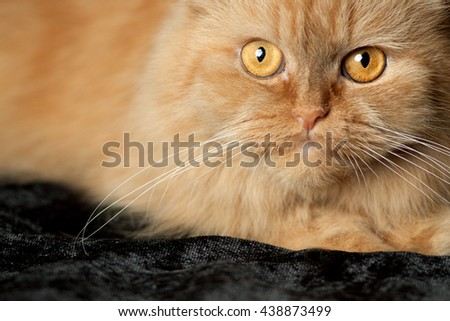 red cats face - stock photo