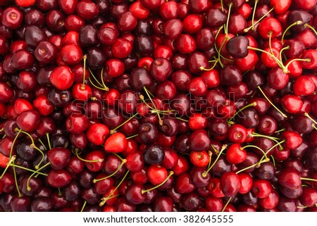 Red Cherries. Cherry selection - stock photo