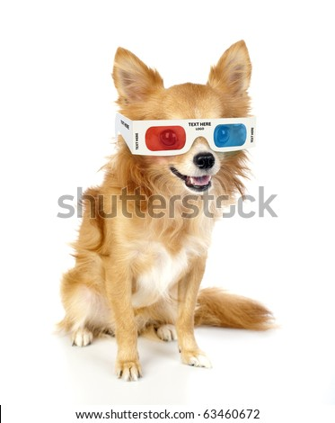 red chihuahua dog with 3d glasses isolated on white looking at camera - stock photo