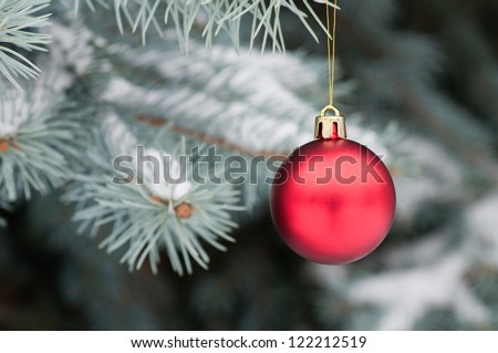 Red Christmas ball  on blue spruce. - stock photo