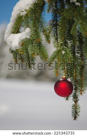 Red Christmas bauble hanging on fir branch - stock photo