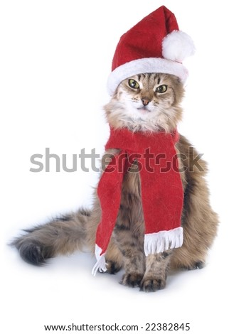 Red Christmas cat