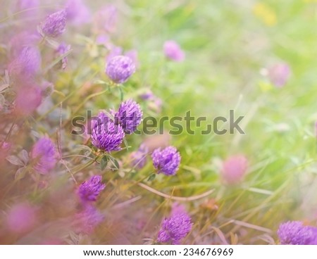 Red clover in meadow - stock photo