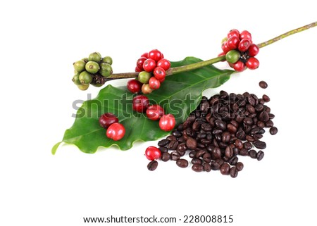 Red coffee beans on white background - stock photo
