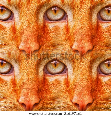 red color cat eyes - stock photo