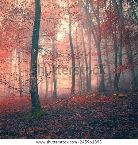 Red color fantasy light foggy Autumn forest scene background. - stock photo