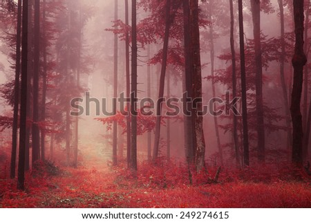 Red colored foggy fantasy forest scene with path. Filter color effect used. - stock photo