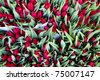Red colorful tulips closeup on sale in Amsterdam flower market - stock photo