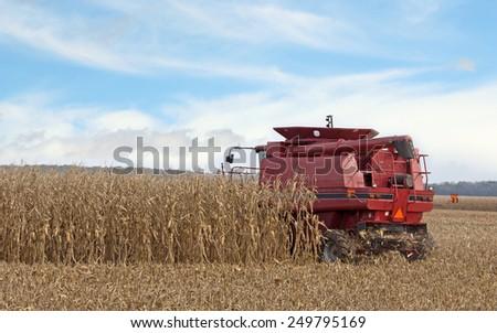 Red combine harvesting corn in a farm field - stock photo