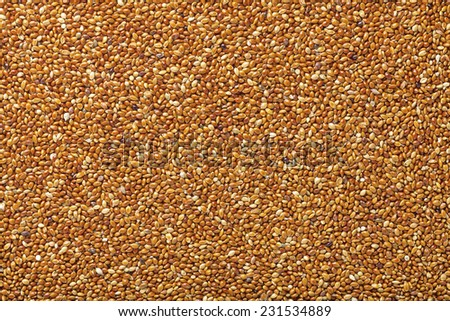 Red common millet with husks - stock photo