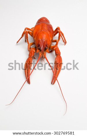 Red cooked crayfish on a white background - stock photo