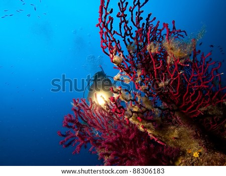Red coral and scuba diver