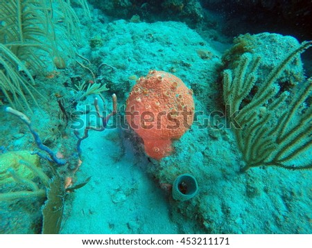 Red coral on the wreck of the Copenhagen off the coast of Pompano Beach, Fort Lauderdale, Florida - stock photo