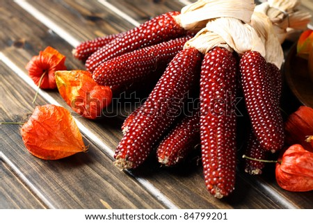 red corn collection - stock photo