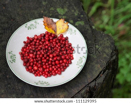 Red cranberries on a plate - stock photo