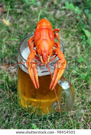 Red crawfish with beer on green grass - stock photo