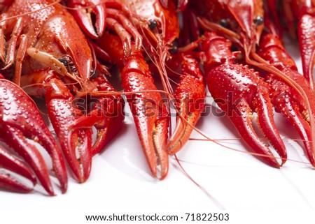 Red crayfish. Fresh seafood - stock photo