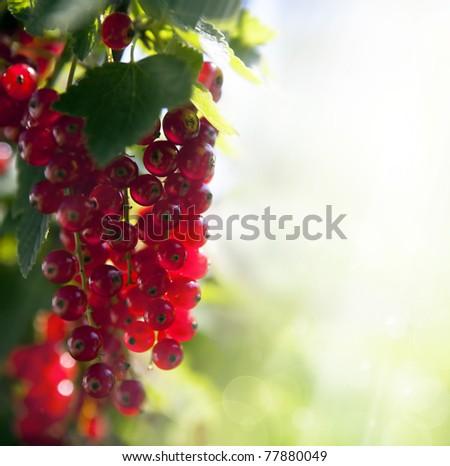 red currant berries illuminated rays of summer sun - stock photo
