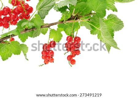 red currant isolated on a white background - stock photo