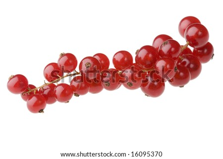 Red currants isolated against white background (no shadows)