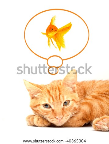 Red cute cat - stock photo