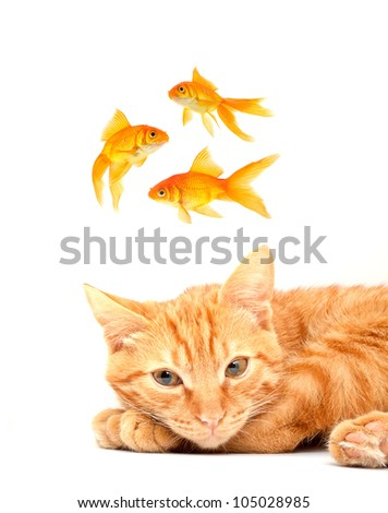 Red cute cat on a white background - stock photo