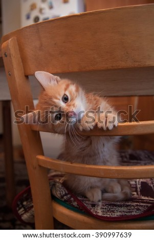 red cute kitty, puppy sitting on the chair and peeps