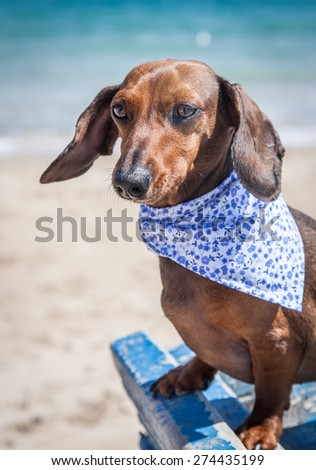 Red dachshund dog on a boat - stock photo