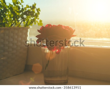 Red dahlia flwoer in glass on the home window - stock photo