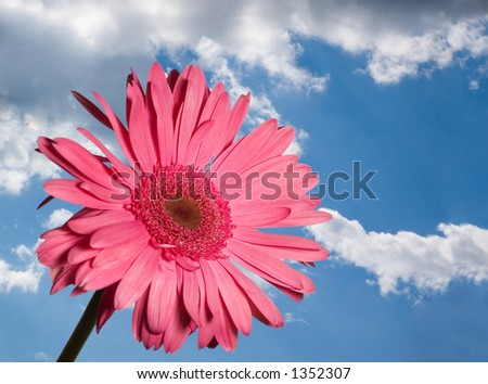 Red daisy on blue cloudy sky - stock photo