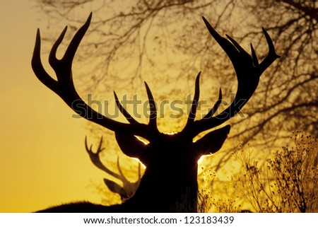 Red Deer Stag Silhouette - stock photo