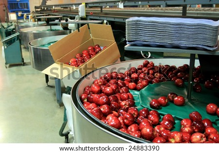 Red Delicious apples in packing tub at fruit warehouse - stock photo