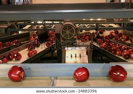 Red Delicious Apples on conveyor belt in fruit packing warehouse - stock photo