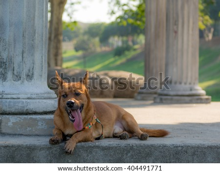 Red dog fox - stock photo